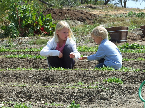Organic Farm 053