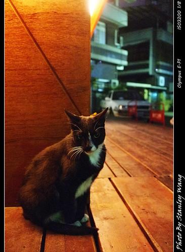 台中Forro的貓