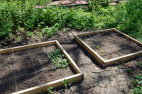 the garden beds so far