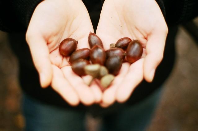 L'automne ds tes mains