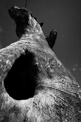 A poor man's memory (Christian DF) Tags: wood sky bw naturaleza black tree nature one 1 madera hole natural agujero negro bn sp uno cielo rbol cdf apoormansmemory suenyospolares sueospolares christiandf christiandfes christiandomnguez