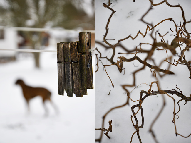 Tränypor