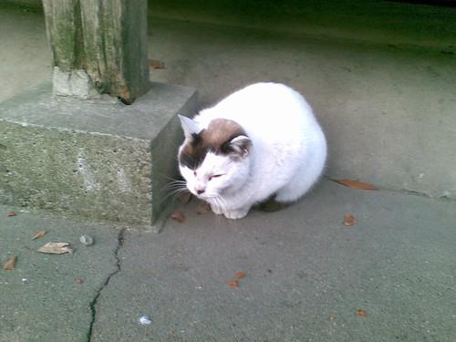 NOKIA E63 の「今日の猫」デビュー