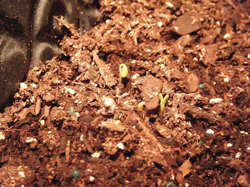 Our First Sprout Pictures