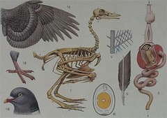 vogels in de winter - bijplaat (vroomshoop.com) Tags: holland netherlands nederland overijssel dorp koekkoek vroomshoop kassusa twenterand jankassies