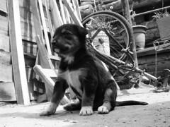 Rey (innsanitaria) Tags: art digital perros animales cachorros fotografia mascotas pequeños innsanitaria