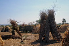 Tribal views: the Nyangatom at Kangate: huts and harvests (10b travelling) Tags: africa ctb river village grain harvest straw tribal hut valley ten afrika ethiopia tribe carsten kanga est afrique brink hornofafrica omo eastafrica ostafrika rift abyssinia 10b ethiopie bume almostabstract cmtb tenbrink aethiopien nyangatom kangate