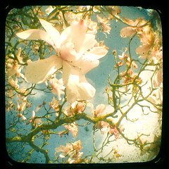 (_cassia_) Tags: blur tree sunshine shop clouds vintage spring forsale branches magnolia etsy dust imperfection ttv throughtheviewfinder cassiabeck cassiabeckcom