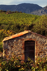 DT_VIN.074 (photonogrady) Tags: autumn green field leaves barn automne countryside leaf vineyard wine hill vine vert foliage vin agriculture campagne vignoble vigne grange champ colline viticulture feuille cathare corbieres cathar feuillage winegrowing