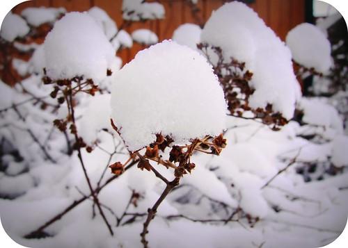 Neige d'avril