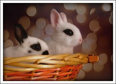 Happy Easter to you!  Buona e serena Pasqua a voi! (Chiarissima) Tags: baby holiday bunnies texture easter happy sweet bokeh serene lapin dolci pasqua feste buona coniglietti fakebokeh millefeste conlasperanzachequestapasquasiportiviaunpoditristetristezzachemisegueemiaccerchiainesorabilmente