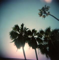 holga palms flare