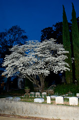 Easter Dogwood (Ron_McKitrick_Imagery) Tags: atlanta lightpainting tree grave stone easter nikon nightshoot ron dogwood comment imagery oaklandcemetery mckitrick dogwoodstory ronmckitrickimagery