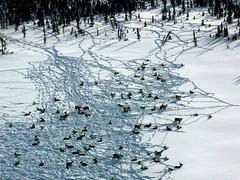 PICT0003_1_3.jpg (ChanHawkins) Tags: snow northwestterritories whereinnwtarewe perhapsalberta chanhawkins
