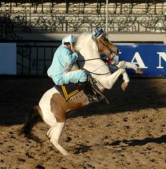 pony rearing (Martina V.) Tags: horse caballo bay tobiano
