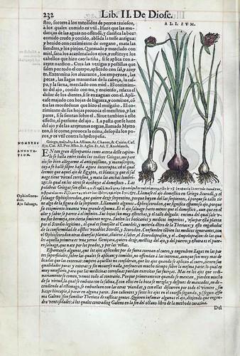 016- Del ajo 2-Pedacio Dioscorides Anazarbeo 1555