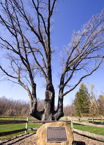 Signal Tree