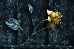 Metal Rose (KC Toh) Tags: flower rose metal golden d70s 花 金玫瑰 铁玫瑰