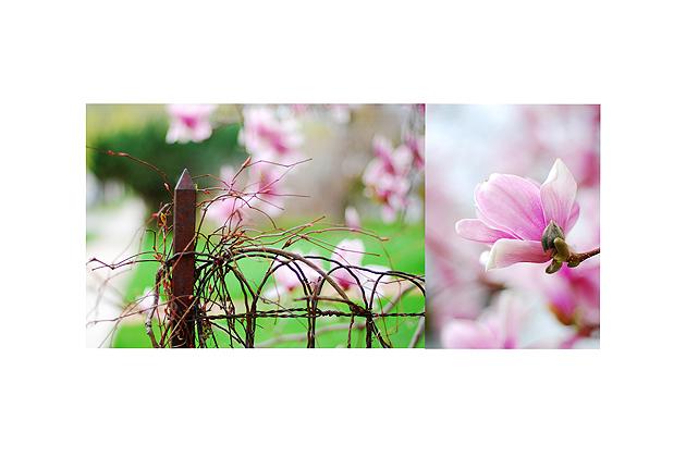 pinktree-reejpg