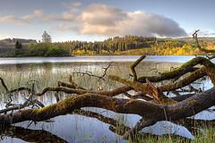 Loch Achray at Sunrise (Surely Not) Tags: sunrise scotland nikon flickr moo loch meet trossachs achray d700 yourphototips