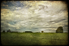 Young Crop. (Pat Dalton...) Tags: sky tree texture clouds canon leicestershire sigma crop 1770mm 450d gumley theunforgettablepictures theunforgettablepicture betterthangood theperfectphotographer rubyphotographer skeletalmess pdeee454 lovetheworldofnature