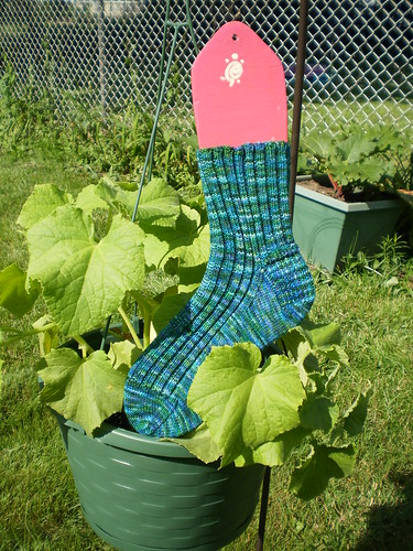 Cucumber socks