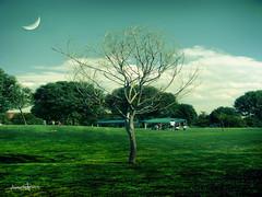 Magia... (Adan Morales Solis) Tags: parque verde mexico arbol jardin super luna fantasia tarde leonguanajuato explora sonyh10 sanfranciscodelrincon adanmorales califrastilistico