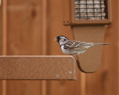 Mystery Finch