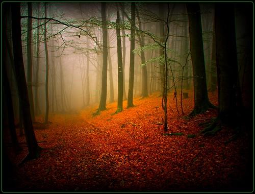 Kurtensiefen - walking in the fog by publik_oberberg