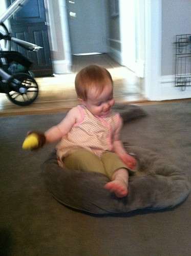 Playing in the dog bed