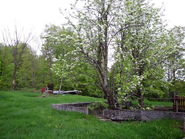 Cabin May 2011-8