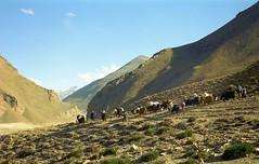 Descending from Lamma la 5120m (reurinkjan) Tags: 2002 nature nikon tibet everest rongbuk tingri jomolangma tibetanlandscape lammala janreurink བོད། བོད་ལྗོངས།