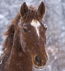 Powdered  Sugar Cappuccino (Johny Day) Tags: horse caballo cheval 4yearsold naturesfinest blueribbonwinner flickrsbest abigfave johnyday theperfectphotographer goldstaraward goldstarawardgoldmedalwinner johnyday explore2009 clubequestrechanteclerccom