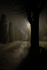 Nocturnus_3852 (trimmer741) Tags: cold tree fog night darkness country trail nocturnus