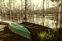 swamping around.. (Danielle Osfalg) Tags: trees green nature water grass relax boat unique lilies swamp cypress hotspot boatride verycool picnis