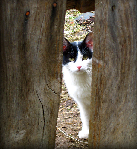 Mirada de gato