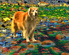Seashore a la Fresco Dog (Rusty Russ) Tags: birthday new red sea usa dog green cars beach wet water rose photoshop manipulated photography gold lights golden harbor solar flying photo yahoo google interesting colorful flickr image buttercup massachusetts newengland picasa hampshire system shore northshore photoediting hampton newsroom northern universe retouching slippery newburyport plumisland stumbleupon bythesea photolight beachocean retrevier newburyportmassachusetts photographylighting freeimage townof frontocean northmassachusetts howtocolor controlcolor freeediting