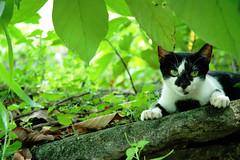 Jobsite Cat II Color (Gilbert Rondilla) Tags: pictures camera cats color green slr nature animal digital cat photography photo nikon feline d70 philippines filipino dslr notmycamera own pinoy borrowedcamera notmyowncamera larawangpinoy litratistakami gilbertrondilla gilbertrondillaphotography luisianian