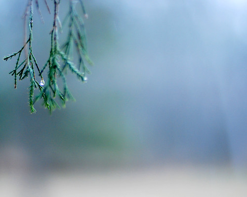 v umbrellas in the rain 036