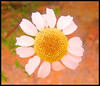 Daisy (Naitoyuki4444710) Tags: pink wallpaper paris anime art japan illustration lune logo de photography petals rainbow spain asia kei pics web banner goth manga super blogger hyde junior oriental visual vamps larme larcenciel suju heechul naitoyuki ainafetse