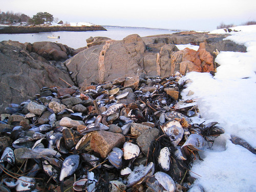mussel shells in snow