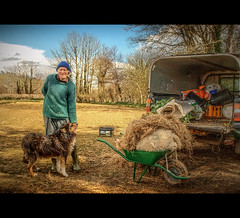 The Traditional Way (Finntasia) Tags: dog wool hat fashion friend sheep feeding character farming sheepdog personality dorset feed farmer tradition fleece wheelbarrow bung finntasia loscombe nigelfinn