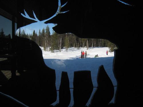 Wild life in Lapland