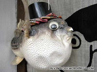 Fugu (puffer fish) spotted