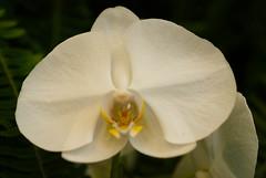 Sherman Gardens-0052 (missjill1) Tags: flowers coronadelmar shermangardens