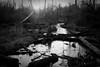 Swamp - B/W (Ryan Guill) Tags: nature tn memphis april 2009 johnsonpark takenbyryan 85points colliervilletn 1on1photooftheweek ryanguill 1on1photooftheweekapril2009