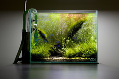 ADA Mini S (Johnny Ciotti) Tags: nature aquarium ada minis aquascape natureaquarium