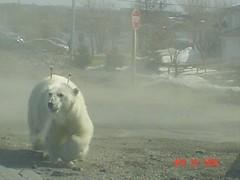 polar9