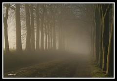 Misty greetings (glidblue) Tags: trees friends light mist amigos castle luz fog mystery alberi arboles shadows path lumire silhouettes explore arbres greetings 1001nights am