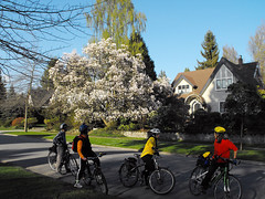 Cherry Blossoms (Rob Murota) Tags: bicycle vancouver cherry blossoms wanderung